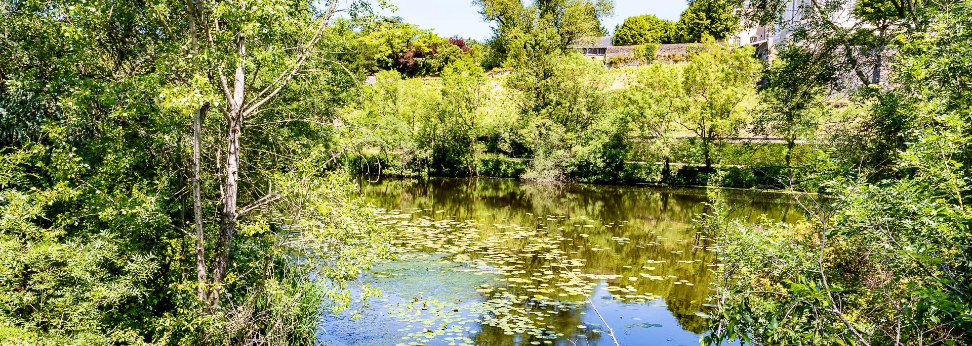 Au bord de l'étang Saint-Nicolas à Angers