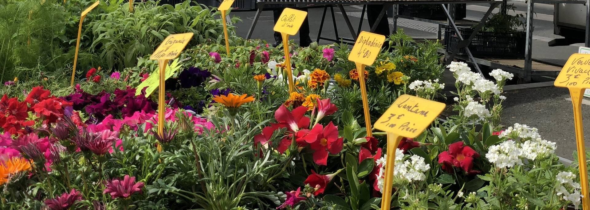 Étal de fleurs, marché Lafayette