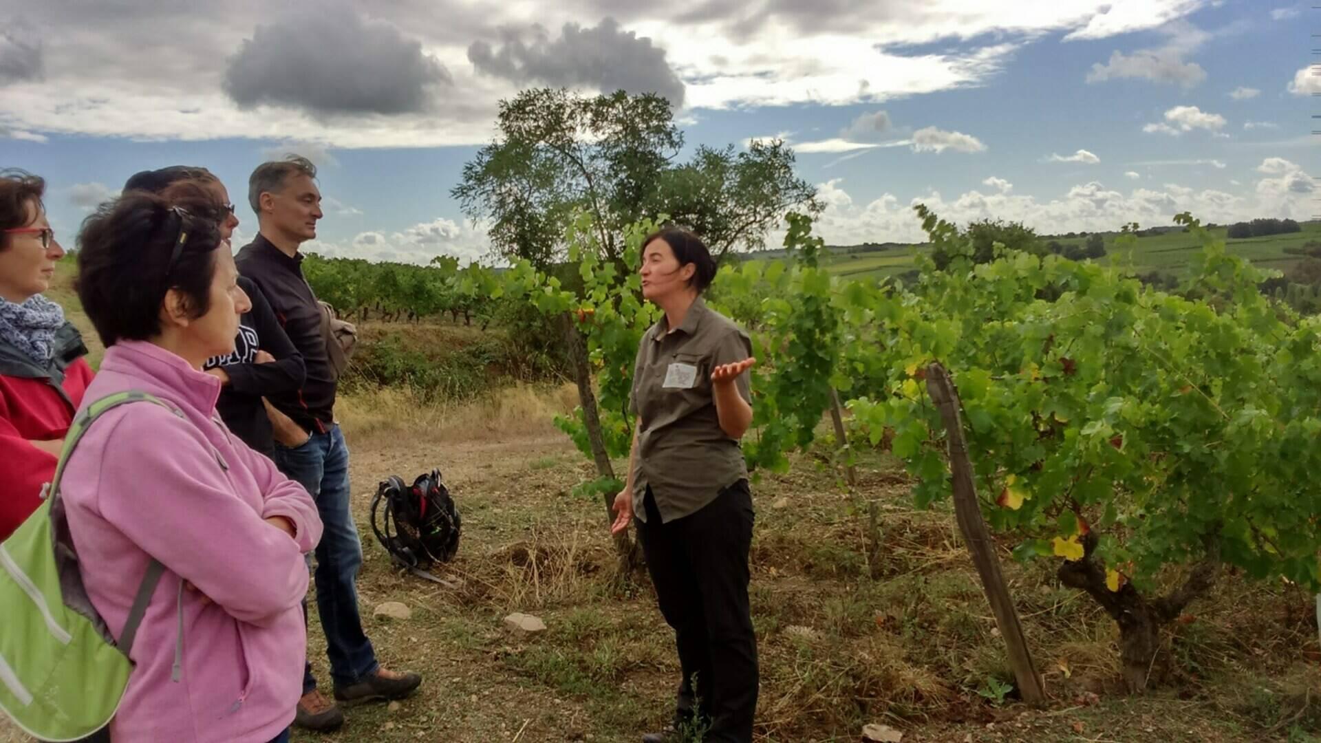 Randonnée dans le vignoble avec Val des Vignes selon Val