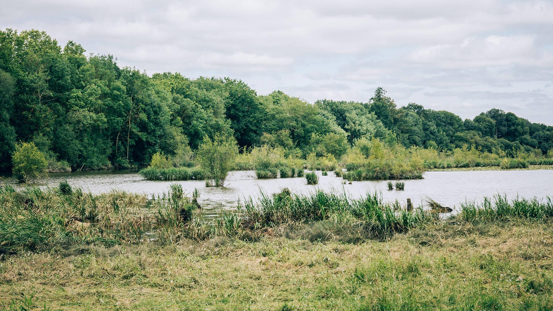 Marais de Montreuil Juigné