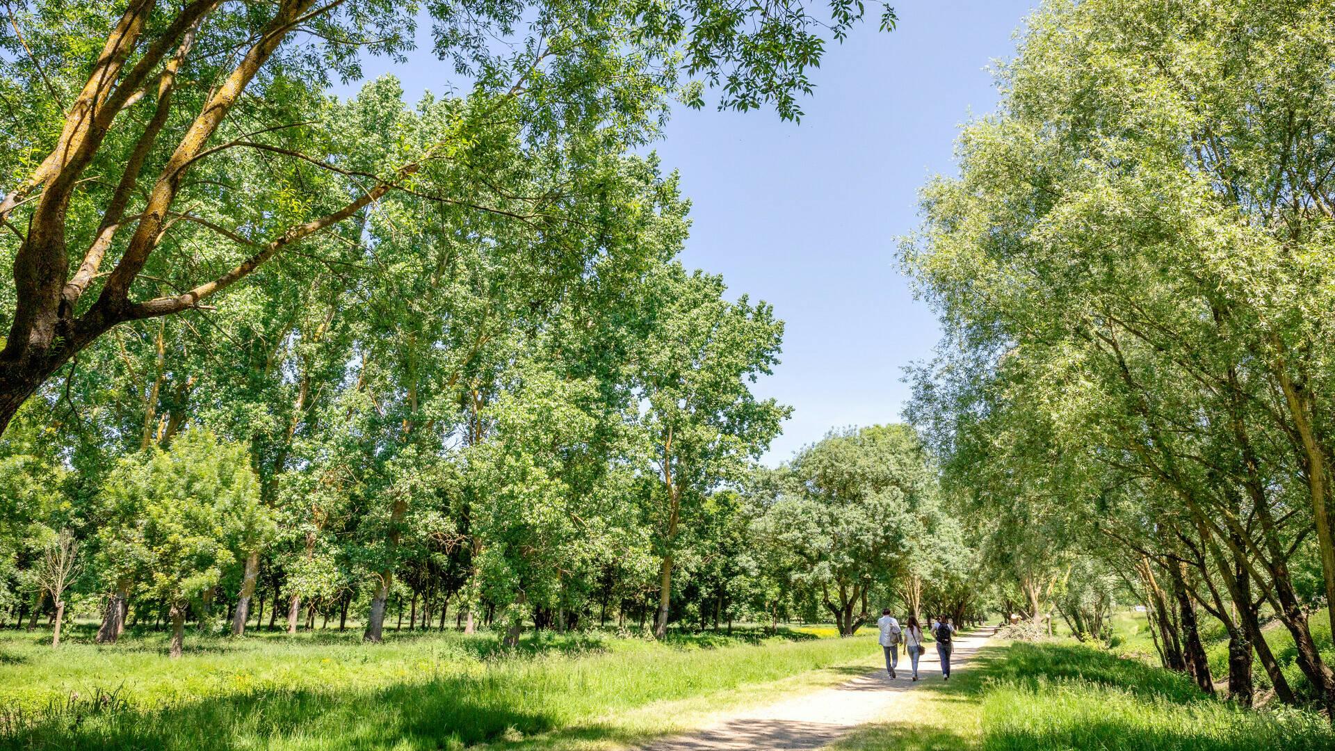 Balade dans la nature en famille au Parc Balzac