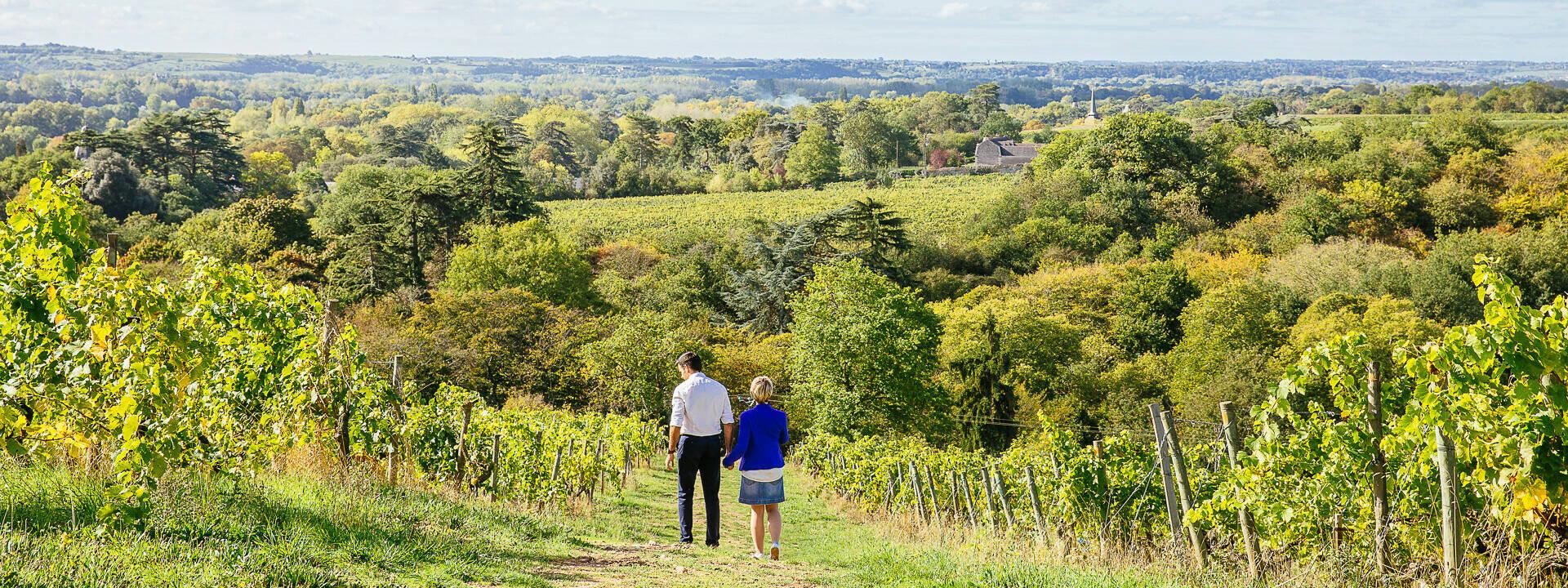 Balade d'un couple dans le vignoble de Savennières