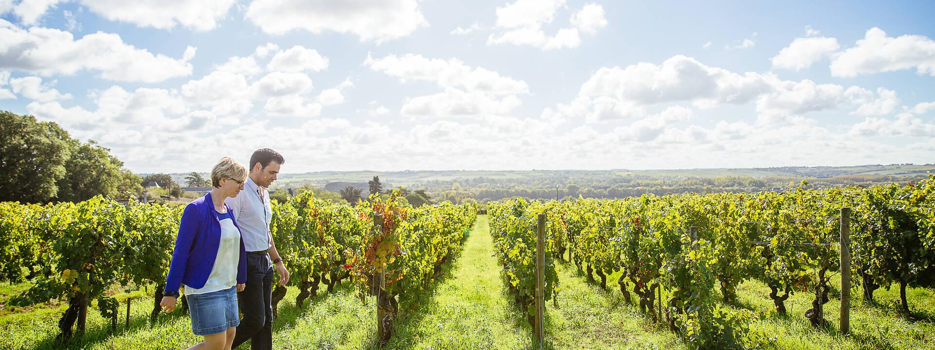 Sillonnez les routes des vins à Angers