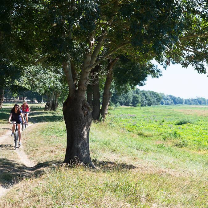 Angers à vélo - Ste Gemmes sur Loire © Patrice Campion