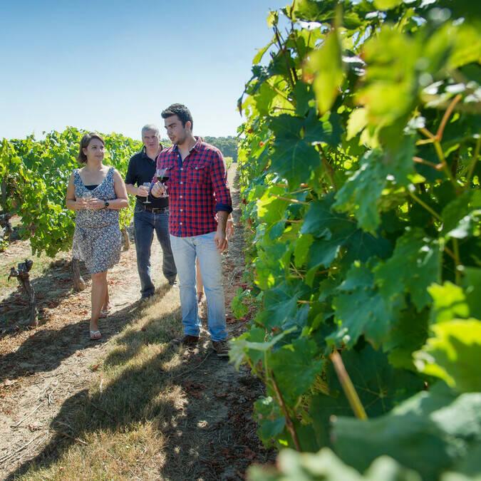 Balade dans les vignes - Domaine des Giraudières