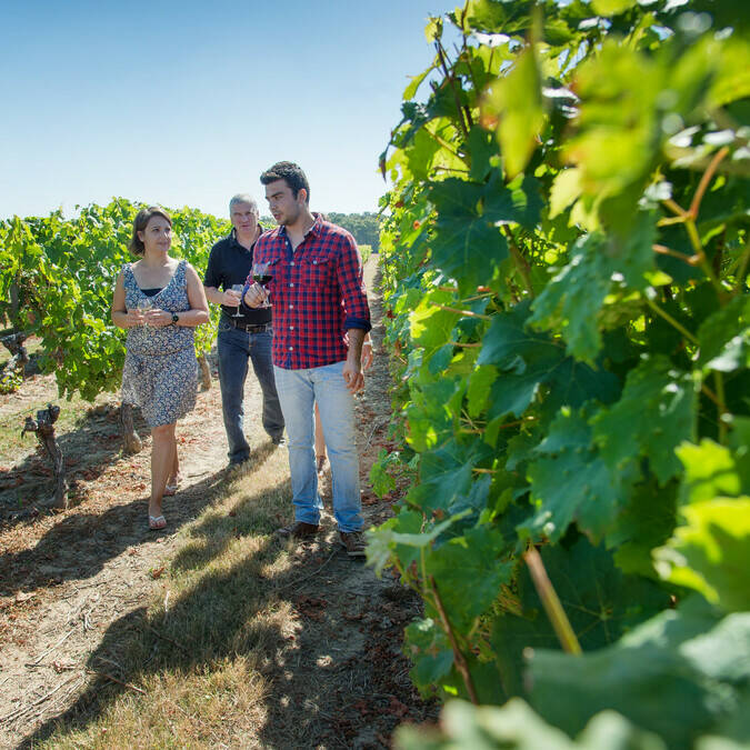 Stroll in the vineyards - Domaine des Giraudières