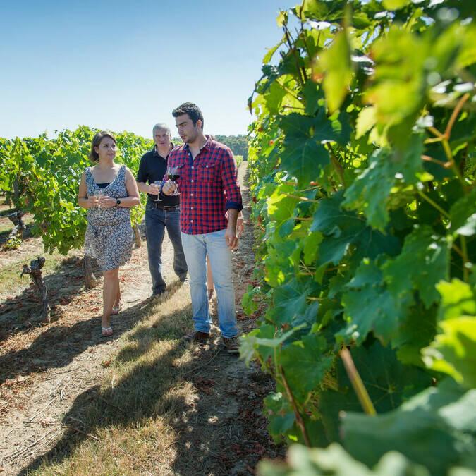 Pasear por los viñedos - Domaine des Giraudières