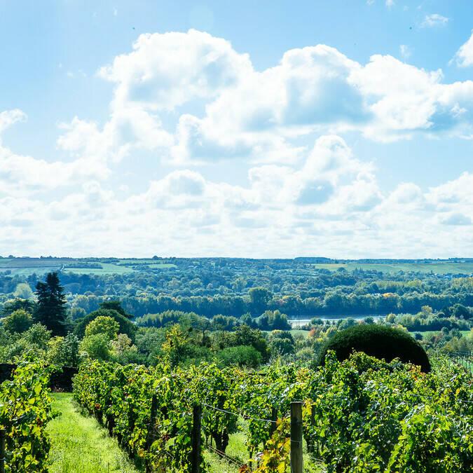 Vue sur les vignobles de Savennières sous le soleil