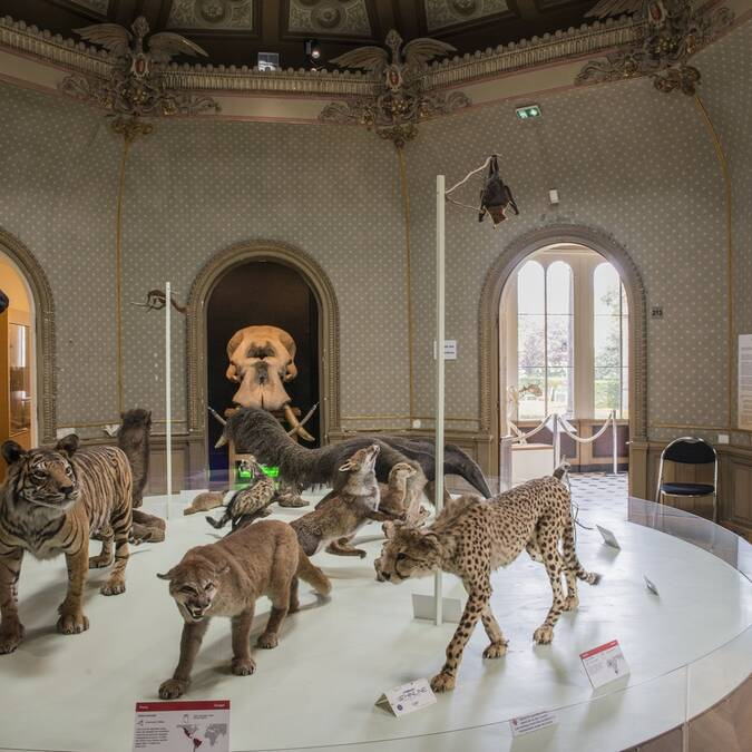 Muséum des sciences naturelles d'Angers