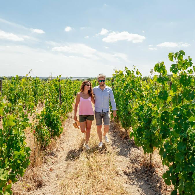 Œnotourisme dans le vignoble d'Anjou-Saumur