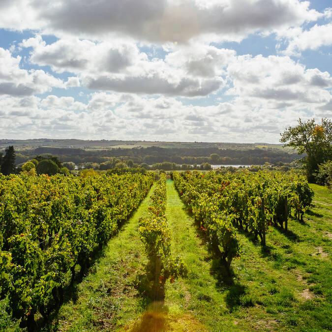 Déguster le vin de Savennières, c'est une des bonnes raisons de venir à Angers ! © les conteurs